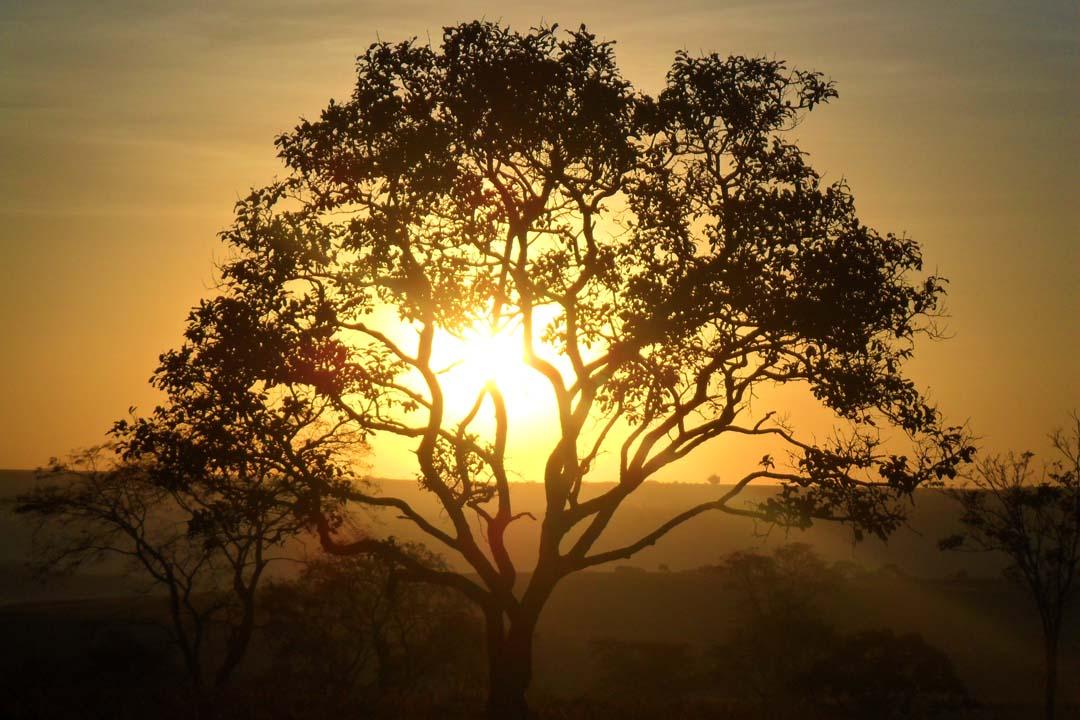Espaço Terapêutico Movimentos Árvore